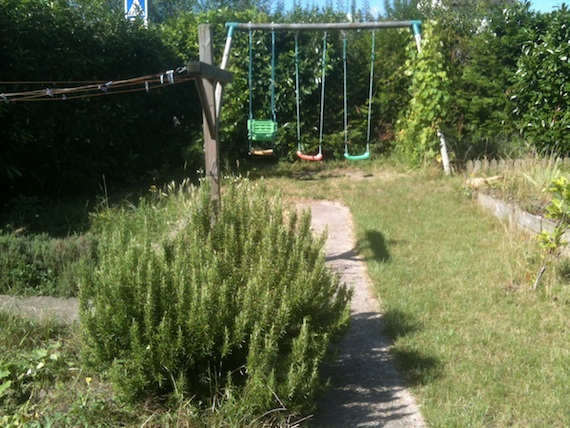 When did this rosemary bush get so big??? Is trimming this now part of my life-affirming duties? I mean - activities?